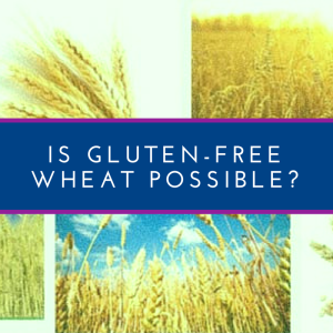 gluten-free wheat